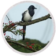 September Magpie Round Beach Towel by Philip Openshaw