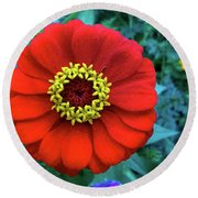September Red Beauty Round Beach Towel