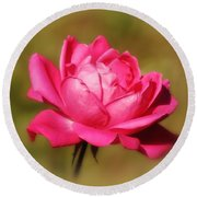 September Rose Up Close Round Beach Towel by MTBobbins Photography