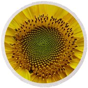 Round Beach Towel featuring the photograph September Sunflower by Richard Cummings