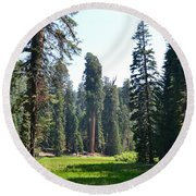 Sequoia National Forest Round Beach Towel by Laurianna Taylor