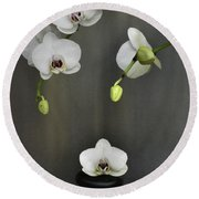 Round Beach Towel featuring the photograph Serene Orchid by Terence Davis