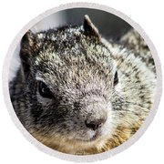 Serious Squirrel Round Beach Towel