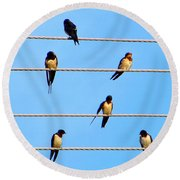 Round Beach Towel featuring the photograph Seven Swallows by Ana Maria Edulescu