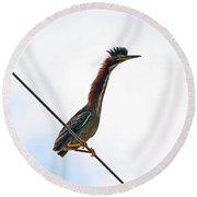 Shaggy Crest Of The Green Heron Round Beach Towel