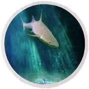 Round Beach Towel featuring the photograph Shark And Anchor by Jill Battaglia