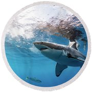 Shark Rays Round Beach Towel by Shane Linke