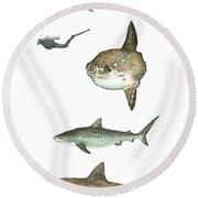 Sharks And Mola Mola Round Beach Towel
