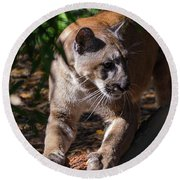 Round Beach Towel featuring the photograph Sharpening Claws by John Black