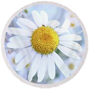 Shasta Daisy Round Beach Towel by Stephanie Frey