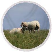 Sheep 4221 Round Beach Towel