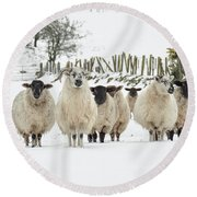 Sheep In Snow Round Beach Towel