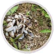 Round Beach Towel featuring the photograph Shells Of Freshwater Mussels by Michal Boubin