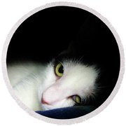 Shelter Cat Round Beach Towel