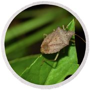 Shield Bug Round Beach Towel