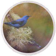 Shining Honeycreeper Round Beach Towel by Janette Boyd