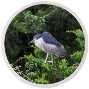 Shore Bird Roosting In A Tree Round Beach Towel