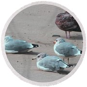 Shore Birds Round Beach Towel by Tom Janca