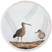 Shorebirds Of Windansea Beach Round Beach Towel
