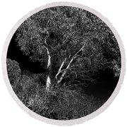Shoreline Tree Round Beach Towel