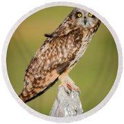 Short Eared Owl Round Beach Towel