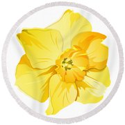 Short Trumpet Daffodil In Yellow Round Beach Towel