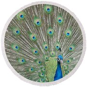 Round Beach Towel featuring the photograph Showing Off by Margaret Bobb