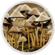 Shrooms Round Beach Towel