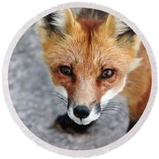 Round Beach Towel featuring the photograph Shy Red Fox  by Debbie Oppermann