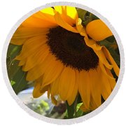 Shy Sunflower Round Beach Towel