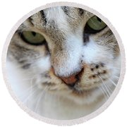 Round Beach Towel featuring the photograph Shyness by Munir Alawi