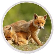 Sibbling Love - Playing Fox Cubs Round Beach Towel