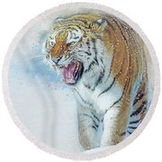 Siberian Tiger In Snow Round Beach Towel by Brian Tarr