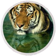 Siberian Tiger Reflection Wildlife Rescue Round Beach Towel by Dave Welling