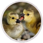 Sibling Love - Baby Canada Geese Round Beach Towel