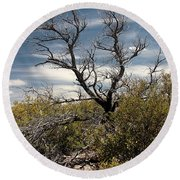 Round Beach Towel featuring the photograph Signs Of Life After The Fire by Joe Kozlowski
