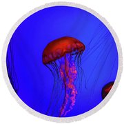 Round Beach Towel featuring the photograph Silent Jellies by Jeff Folger