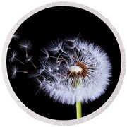 Silhouettes Of Dandelions Round Beach Towel by Bess Hamiti
