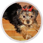 Round Beach Towel featuring the photograph Silky Terrier Puppy by Sue Melvin