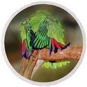 Silly Amazon Parrot Round Beach Towel