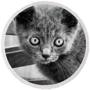 Silver Chartreux Round Beach Towel
