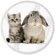 Silver Tabby And Rabby Round Beach Towel