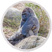 Silverback Gorilla  Round Beach Towel by Donna Brown