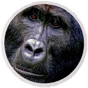 Silverback In The Wild Round Beach Towel by Michael Cinnamond