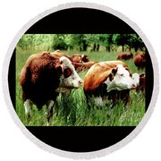 Simmental Bull And Hereford Cow Round Beach Towel