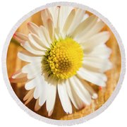 Simple Camomile  In Sunlight Round Beach Towel