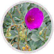 Round Beach Towel featuring the photograph Simple Pretty  Flower by Jasna Gopic