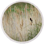 Round Beach Towel featuring the photograph Sing For Spring by Bill Wakeley