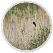 Round Beach Towel featuring the photograph Sing For Spring Square by Bill Wakeley