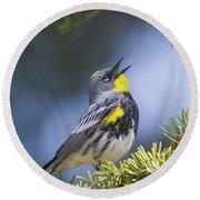 Singing Audubon's Warbler Round Beach Towel